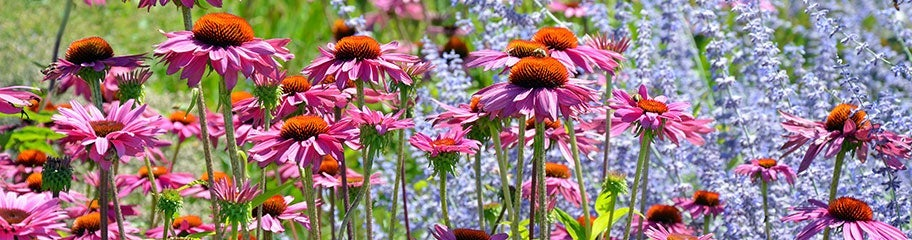 Pre-Planned Gardens, Perennial Collections - American Meadows
