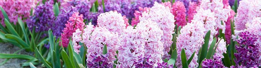 Fragrant spring flowering flower bulbs fragrant fall planted flower add fragrant flowers to your garden mightylinksfo