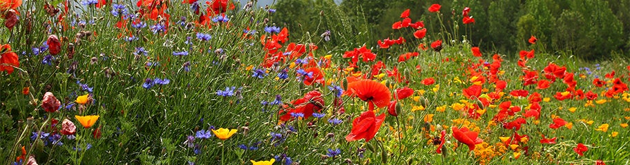 "Seed favour 1/"" hearts blue green mix patterns English wild flower meadow seeds"