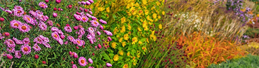 Bulk Perennials American Meadows Advantages Rabbit Resistant