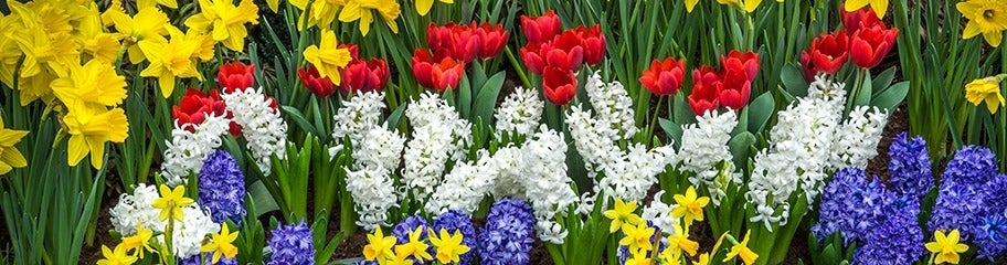 Flower bulbs fall flower bulbs spring flower bulbs american meadows we get a lot of questions about flower bulbs but most involve when to plant them quite simply fall flower bulbs are planted in the fall mightylinksfo