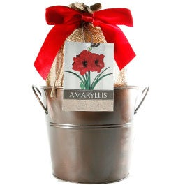 Holiday Gifts48 Varieties