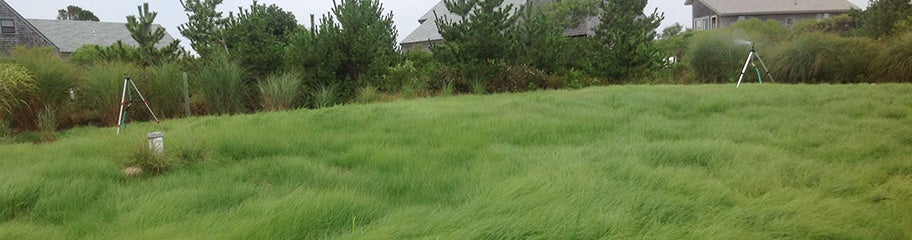 Ornamental grass seed american meadows create a low maintenance textural backdrop with ornamental grass seed workwithnaturefo