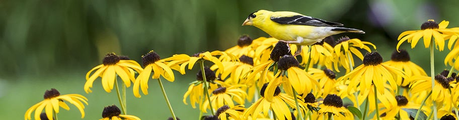 Attract Birds with Perennial Flowers