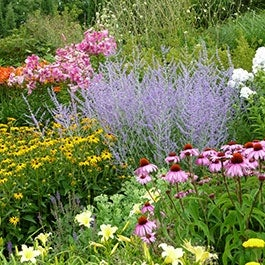 Pre Planned Gardens Perennial Collections American Meadows