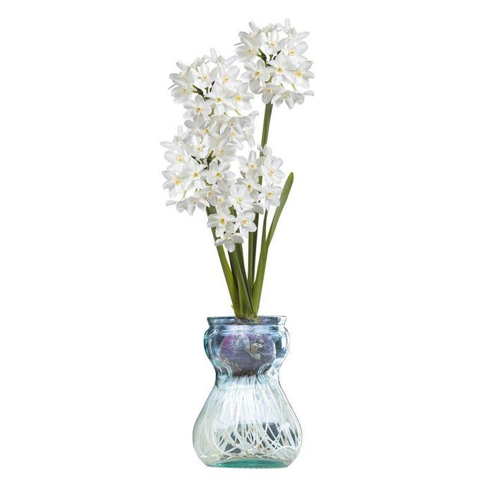 Paperwhite Glass Vase