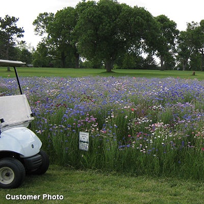 Golf Course Sustainability Wildflower Seed Mix