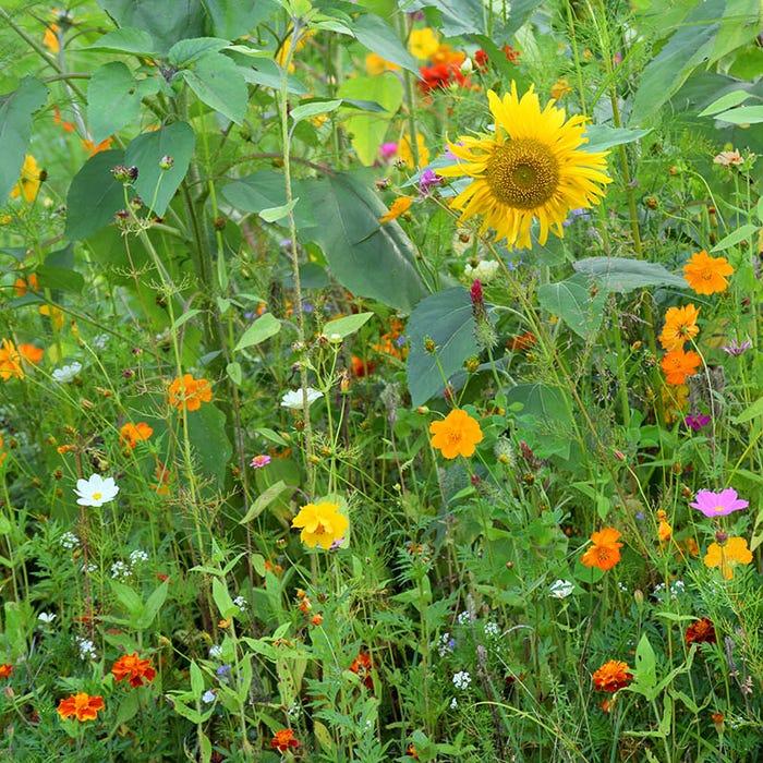 Honey Bee Wildflower Seed Mix