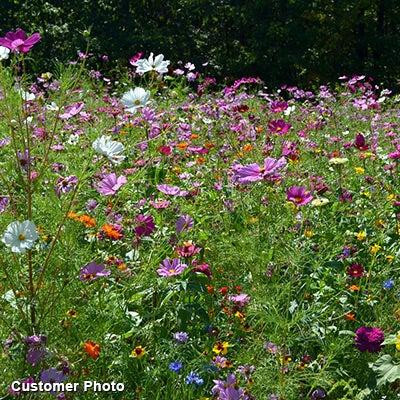 Landscaper's Big Blooms Wildflower Seed Mix