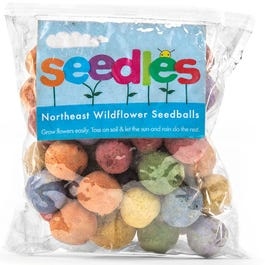 Northeast Wildflower Seed Bombs