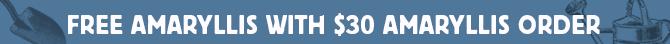 Free Amaryllis Bulb with $30 amaryllis order + Save up to 50% on Amaryllis Bulbs and Kits