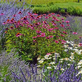 Perennials spring fall planted american meadows for Pre planned landscape