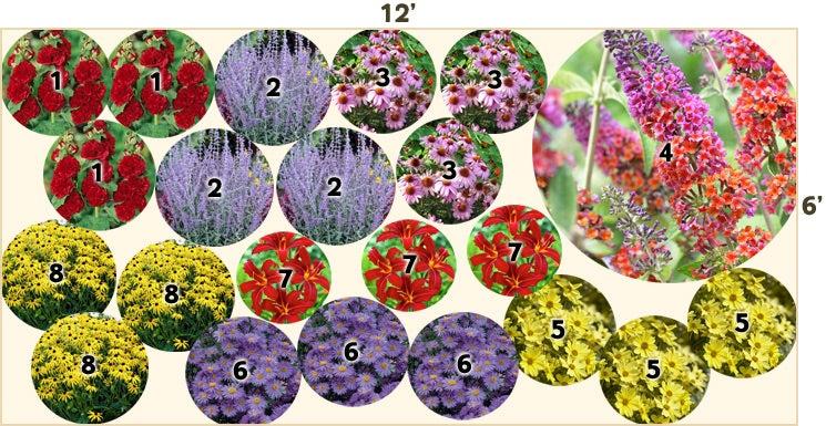 Butterfly garden 12 39 x 6 39 perennials from american meadows for Perennial garden design zone 6