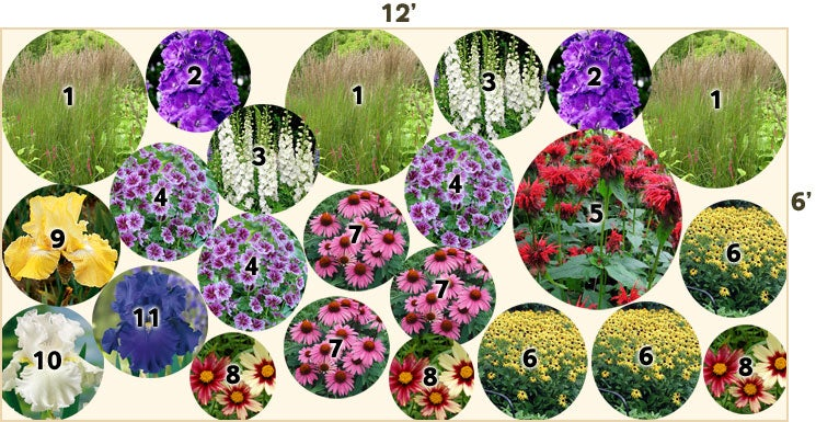 Deer Resistant Garden 12 x 6 Perennials from American Meadows – Garden Plans Zone 7