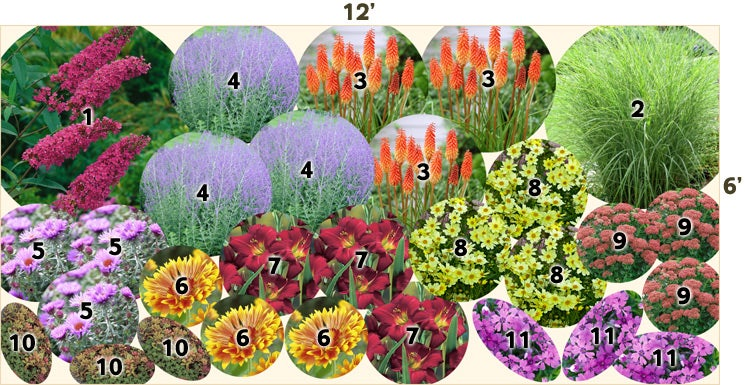 Drought tolerant garden 12 39 x 6 39 perennials from for Perennial garden design zone 9
