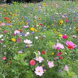 Wildflower Seeds American Meadows - Wild flower garden