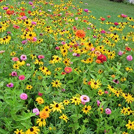 Wildflower seeds american meadows seeds on sale mightylinksfo