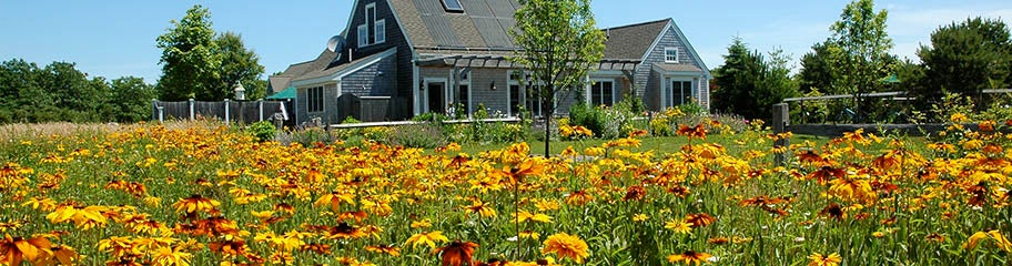 Flower Garden Ideas Northeast northeast wildflower seeds - american meadows