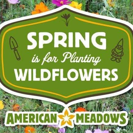 Planting Wildflowers | American Meadows