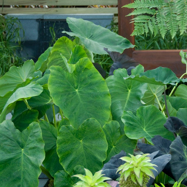 Best Plants For Creating Privacy, Tall Potted Plants Patio Privacy Nz