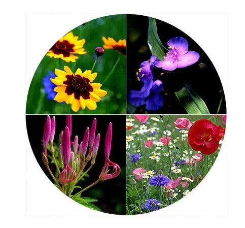 Wildflower Circle