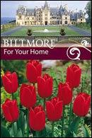 Biltmore Tulip