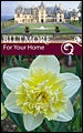 Biltmore Estate Daffodil Ice King
