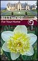 Biltmore Estate Daffodil Ice King