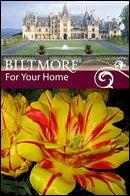 Biltmore Estate Tulip