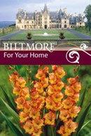 Biltmore Estate Gladiolus