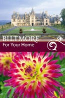 Biltmore Estate Dahlia