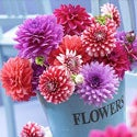 Shop for Spring-Planted Bulbs