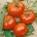 Shop for Vegetable and Herb Seeds