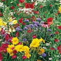 Shop for Wildflower Seed