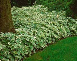 What To Plant On A Slope For Ground Cover Garden Design