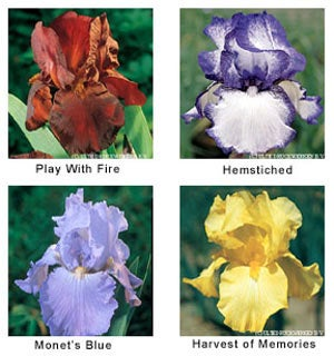 Bearded Irises