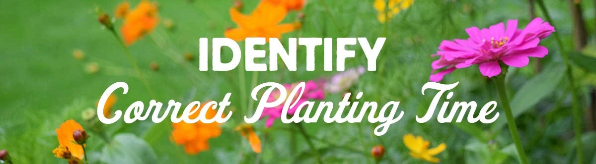 identify the correct wildflower planting time