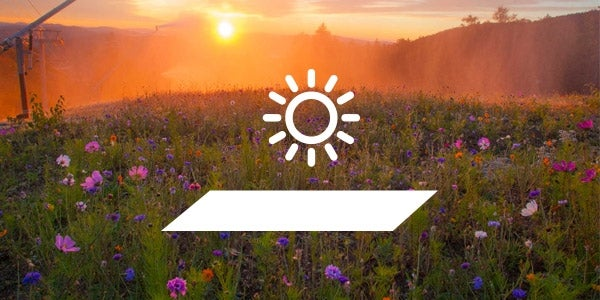 how to solarize weeds before planting