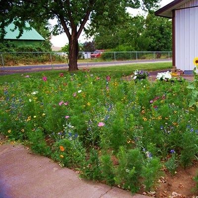 Wildflower Seed Planting Instructions