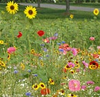 Shop for Wildflower Seeds