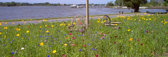 Wildflowers on Maryland Riverfront