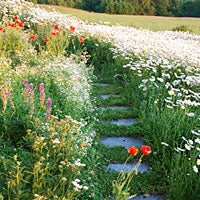 walkway in wildflower meadow
