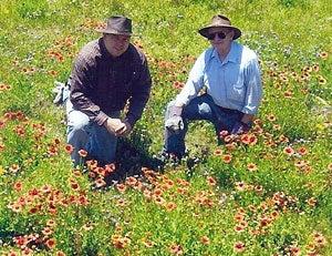 Meadow gardeners