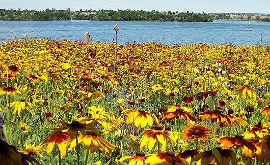 pacific northwest wildflowers
