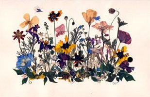 pressed wildflowers