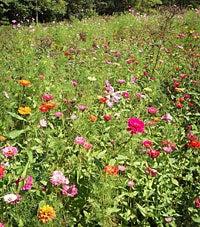 Southeastern Wildflowers