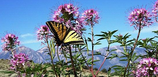 Southwest Wildflowers