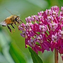 Regional Plants Attract Regional Pollinators