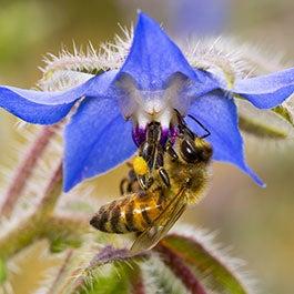 Attract Pollinators