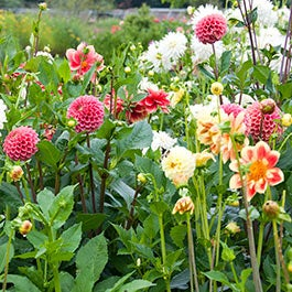 The Best Bulbs for your garden